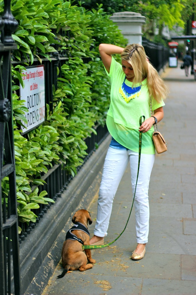 fashion blogger harrods puppy neon the die green and blue