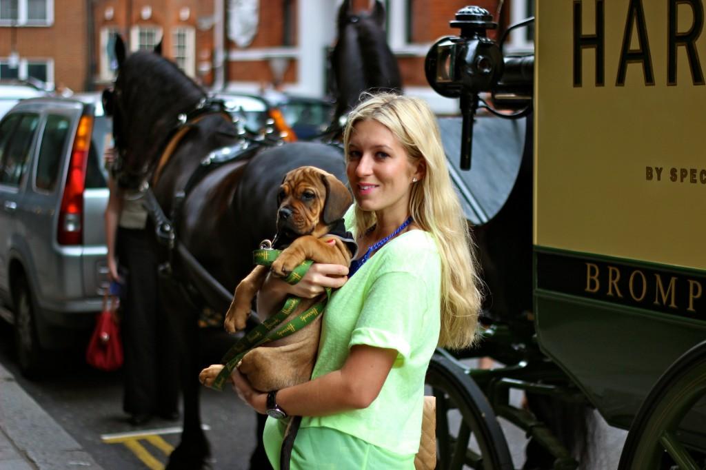 neon green tee fashion blog puppy harrods